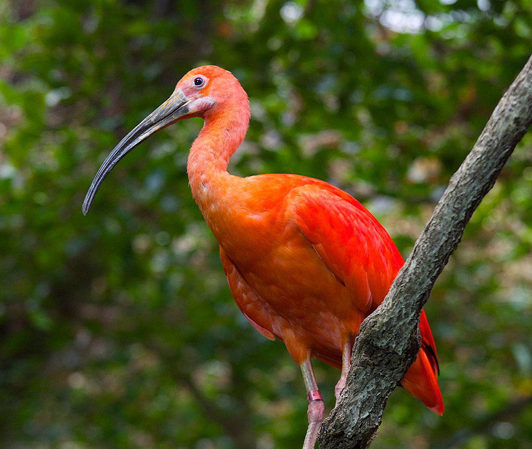 """disability in the scarlet ibis raymond s One of our newest bookstore sections is """"pedagogies of resistance,"""" which was created in response to the outcome of the 2016 election the list was updated last month, and it's."""